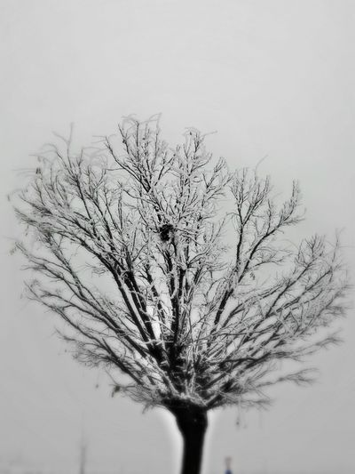 Frozen Tree Bare Tree Branch Tree Nature Beauty In Nature Tranquility No People Sky Day Outdoors Close-up Foggy Weather Smartphone Photography Smartphonephotography Smartphonephotography Mobilephotography Hello World Hello ❤ Cristmas Time♥ Nature Hello World ✌ Smartphone Photos Smartphone Photographer Smartphone Photography Smartphonephotography Smartphonegraphy Foggy Weather My Year My View