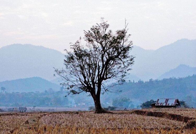 Pai Northern Thailand Tree Dusk Landscape Farming Land Agriculture