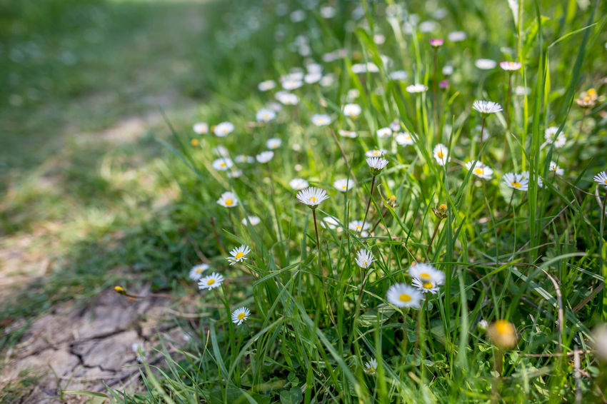 Beauty In Nature Close-up Day Field Flower Flowering Plant Fragility Freshness Grass Green Color Growth Land Nature No People Outdoors Plain Plant Selective Focus Tranquility Vulnerability