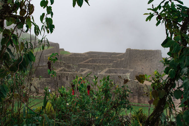 Plant Growth Nature Tree Plant Part Leaf Green Color Architecture No People Day Beauty In Nature Built Structure Sky Tranquility Tranquil Scene Outdoors Scenics - Nature Land Environment Branch Stone Wall Machu Picchu Inca Inca Ruins