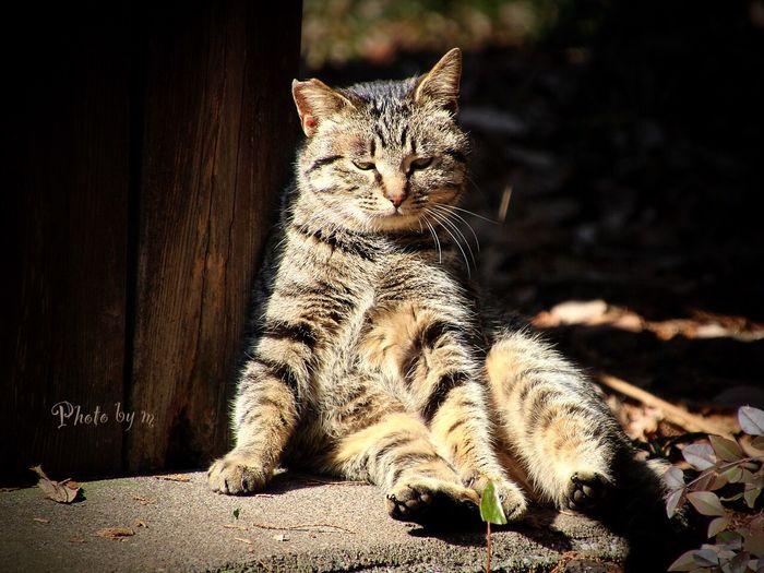 Cat Stray Cat 野良猫 Cat♡ 猫 Animal Playing With The Animals キジトラ おっさん猫 Photography