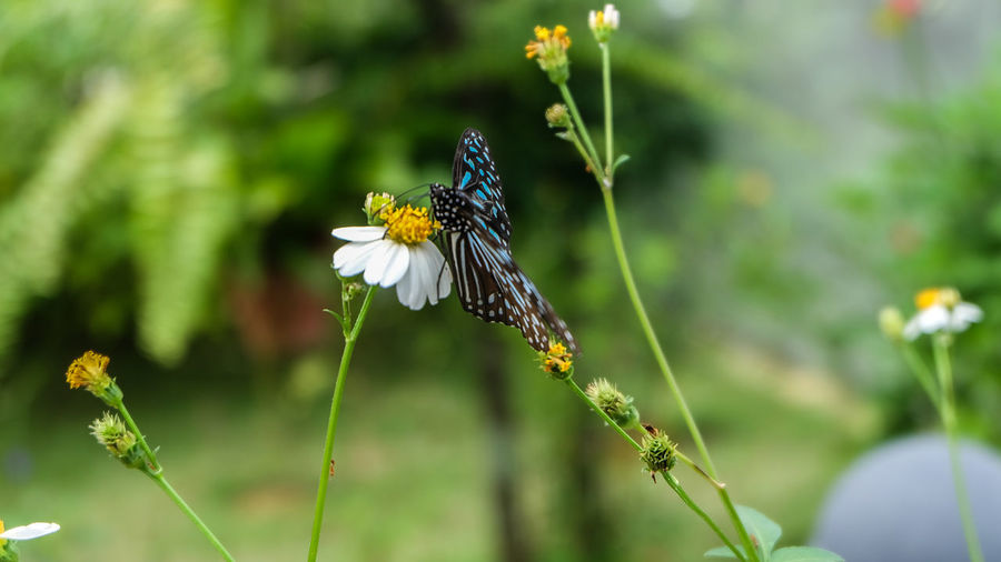 Beauty In Nature Butterfly Butterfly - Insect Close-up Flower Insect Nature Outdoors Wildlife