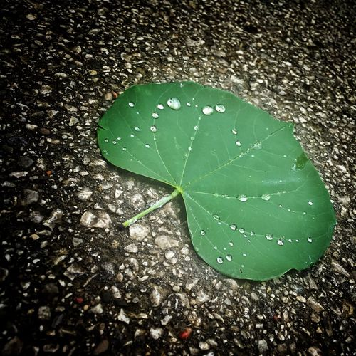 ...after the rain 🍃 Rain Water_collection Raindrops Parks