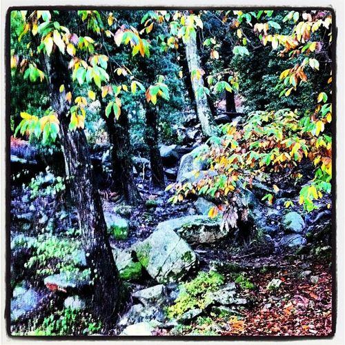 La fitta tramatura del bosco relax per i miei occhi