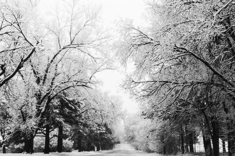 Black And White Friday Tree Bare Tree Nature Branch Beauty In Nature Outdoors No People Tranquility Day Winter Low Angle View Scenics Forest Cold Temperature Snow Sky Freshness