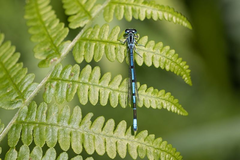 dragonfly Damselfly Dragonfly Plant Green Color Leaf Plant Part Growth Close-up Nature Beauty In Nature Insect Fern Animal Wildlife