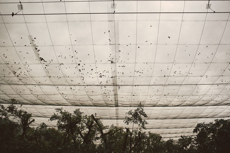 Plant Tree No People Nature Low Angle View Sky Architecture Day Built Structure Outdoors Growth Beauty In Nature Tranquility Wall - Building Feature Scenics - Nature Cloud - Sky Sport Ceiling Net Bird Park