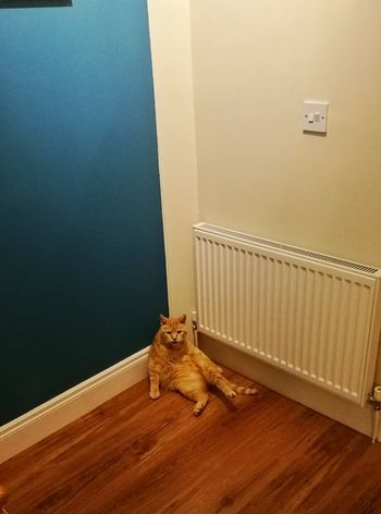 Just chillin' Cat Indoors  One Animal Home Interior Radiator Pets Animal Themes HuaweiP9Photography Cool Cats  Chilling At Home Don't Care Cute Cat Pet Portraits