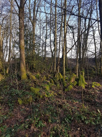 Wald Tree Day Nature Tree Trunk Growth Outdoors Forest