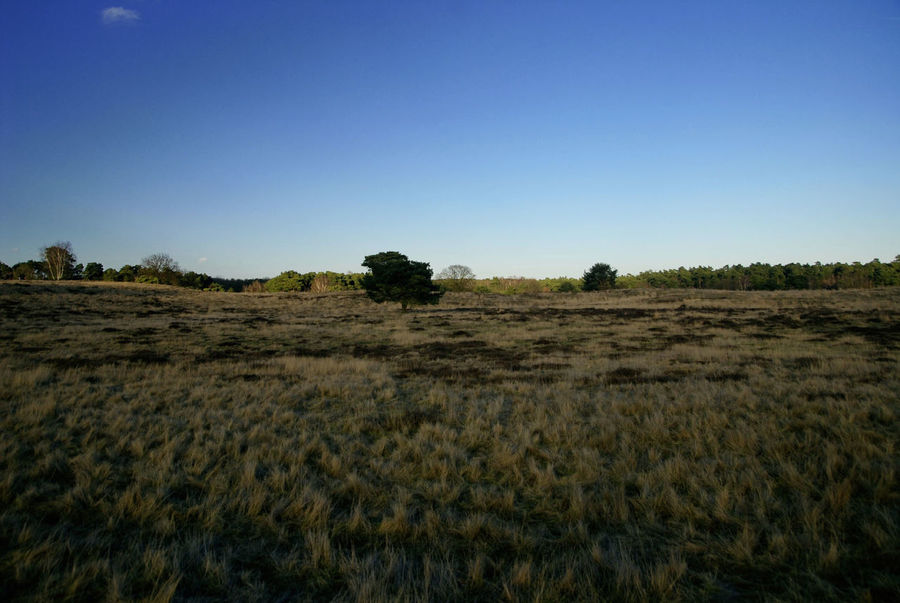 Clear Sky Field Haltern Halternamsee Heide Idyllic Landscape Nature Outdoors Westruper Heide