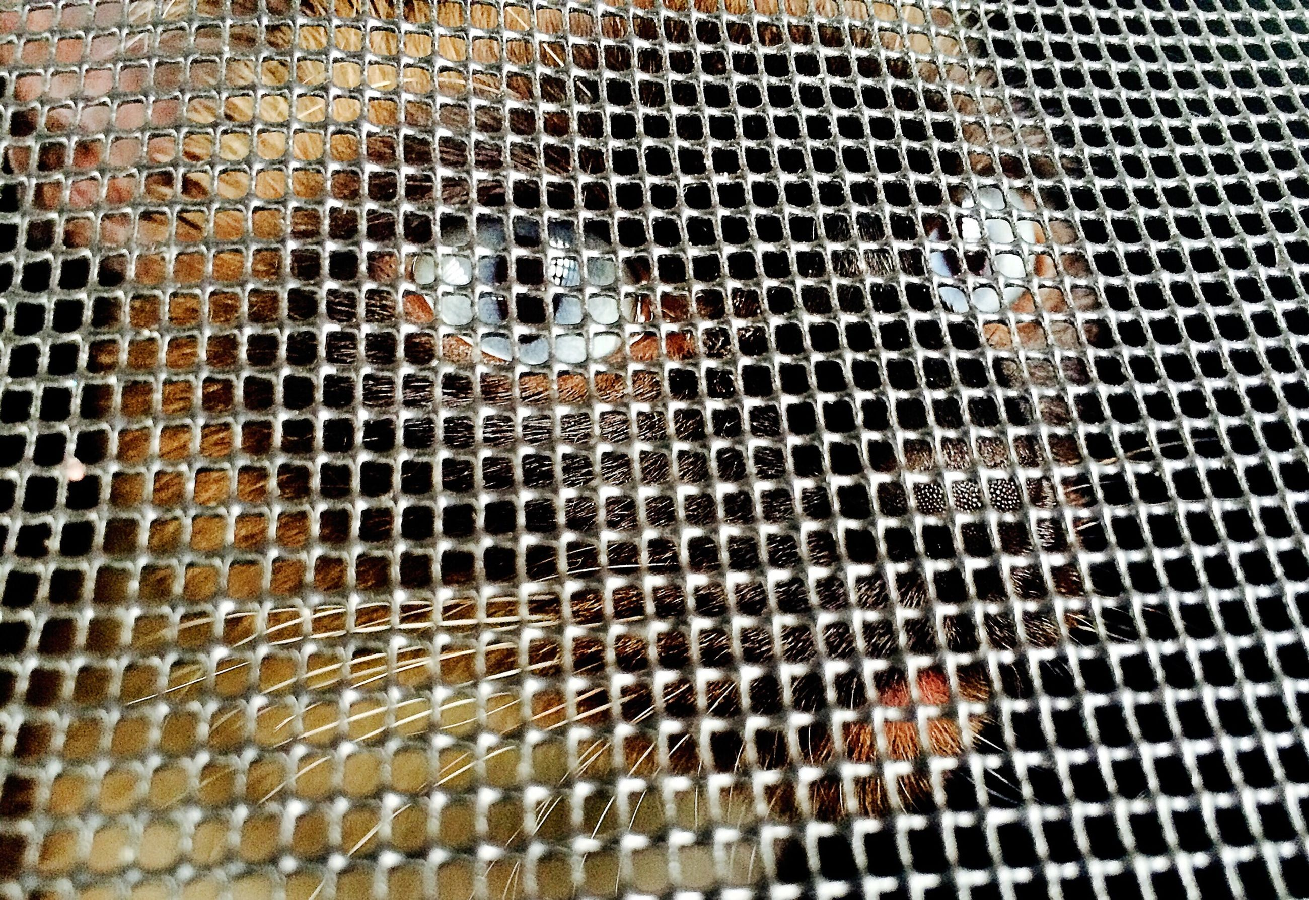 animal themes, metal, metal grate, full frame, pattern, animals in the wild, close-up, backgrounds, high angle view, metallic, indoors, wildlife, heat - temperature, no people, fish, one animal, day, construction site