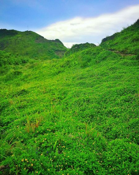 Green Color Nature Beauty In Nature Scenics Grass Growth Outdoors Mountain Day Landscape Sky Osmeña Peak Fog Scenery Tourism Relaxation Travel Destinations Blue Sky Mountain Range Cloud - Sky Cebu City, Philippines