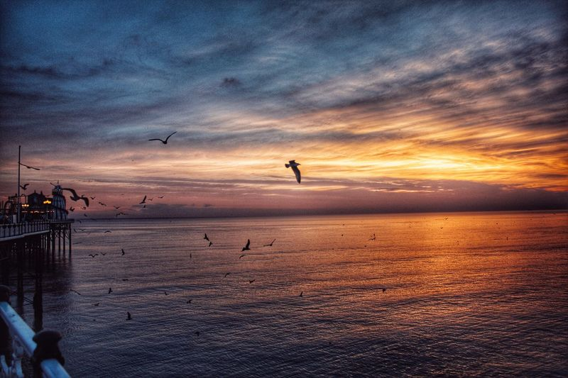 Feeding time Sunset Bird Water Scenics Flying Tranquil Scene Animal Themes Tranquility Sea Animals In The Wild Beauty In Nature Cloud - Sky Idyllic Orange Color Sky Wildlife Horizon Over Water Sun Nature Waterfront