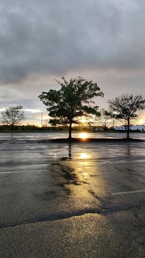 Tree by road against sky during rainy season