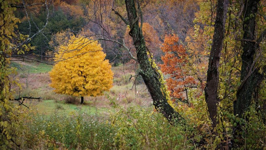 Tree Autumn Plant Land Forest Beauty In Nature Tree Trunk Trunk Tranquility Growth Change Nature Yellow Day Tranquil Scene Scenics - Nature No People Non-urban Scene Outdoors Landscape WoodLand Fall Autumn Collection
