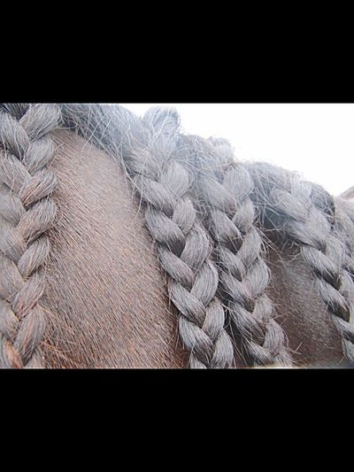 Bullie his manes Horse Horses Manes Plait Plaits