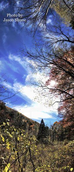 望天鹅 Tree Sky Nature Tranquil Scene Beauty In Nature Tranquility No People Scenics Cloud - Sky Day Growth Outdoors Landscape Mountain Branch Low Angle View Bare Tree