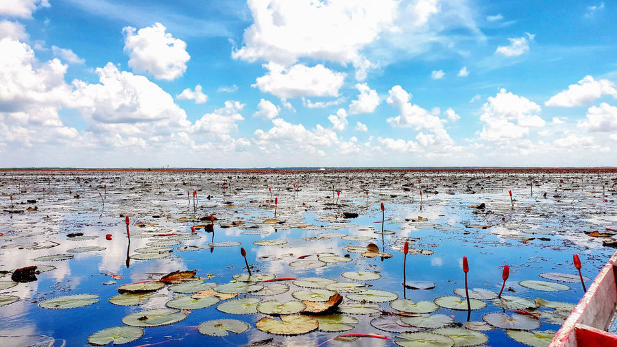 Lotus Lily Water Beauty In Nature Nature No People Lotus Lotus Water Lily Water Flower Pink Color Cloud - Sky Reflection Day Sky Sea Horizon Scenics - Nature Beach Horizon Over Water Tranquility Tranquil Scene Land Outdoors Idyllic Non-urban Scene Blue Pollution Lagoon