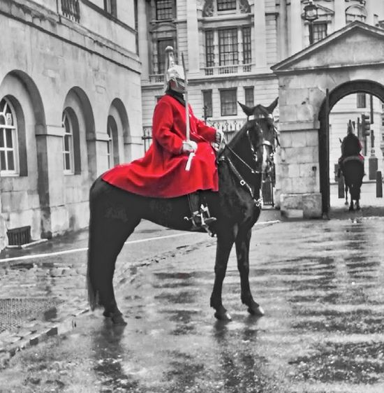 Horse Uniform Colour Pop Pagent Red Full Length People Adult Outdoors City Adults Only Day