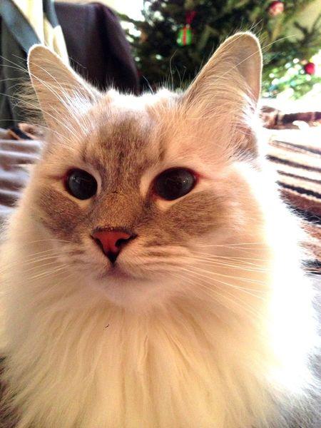 Lloyd the Cat Cute Pets Pets Petstagram