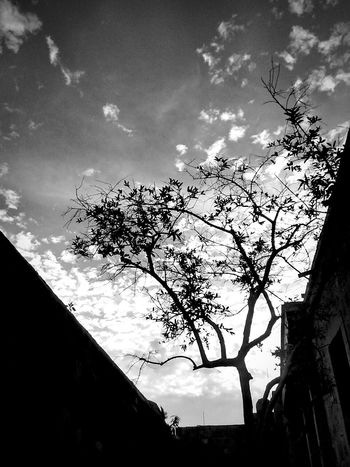 Hanging Out Check This Out Fujifilm Leaves Branches Tree Shadow