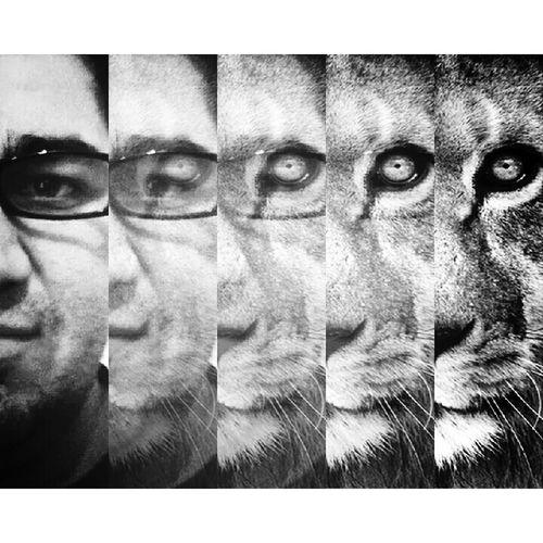 Balneário Camboriú Litoral Catarinense Lion