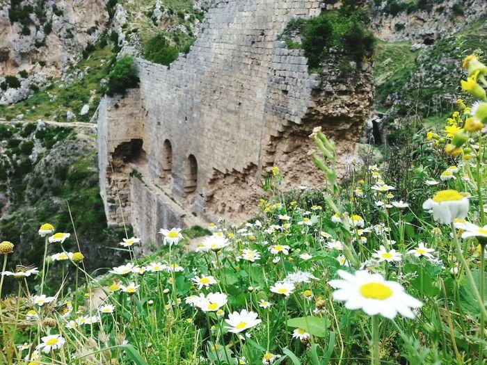 Antiochia Historic Historical Building History Archaeology Daisy Camomille Flowers Naturel Nature Naturelovers Turkey Antakya Demirkapı