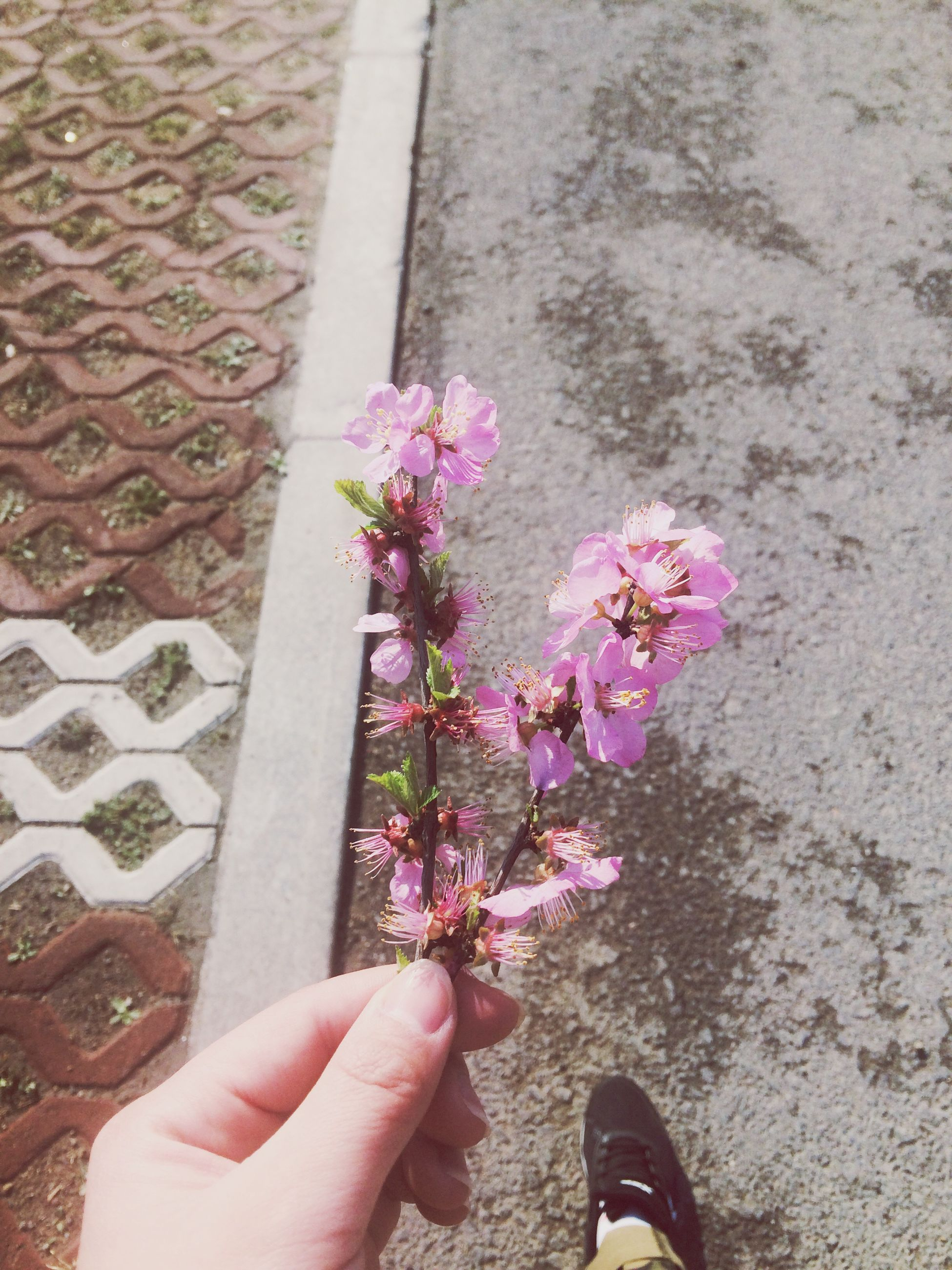 person, personal perspective, flower, holding, part of, unrecognizable person, cropped, low section, human finger, high angle view, freshness, lifestyles, leisure activity, fragility, day