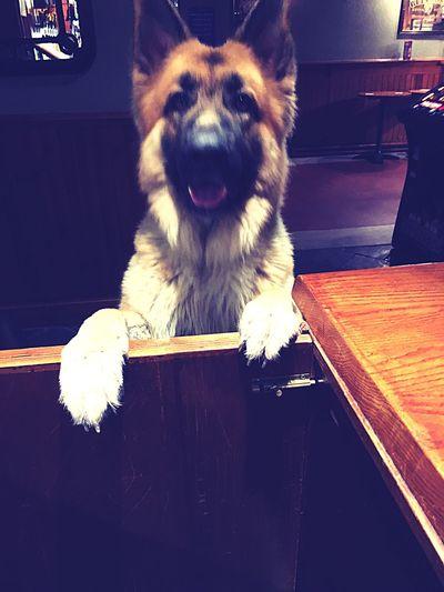 Pint please lassie?