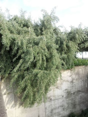 Great Atmosphere Wall - Building Feature Tree Softness