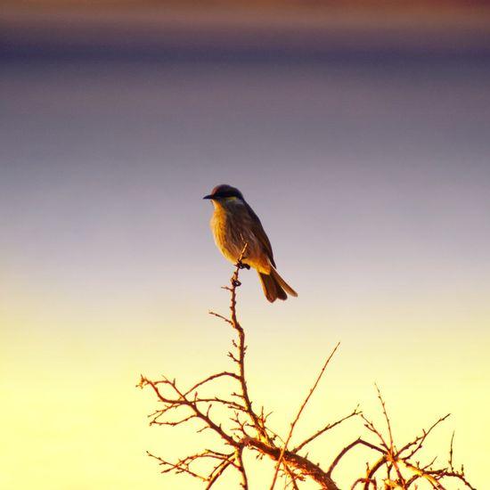 Birdlife at