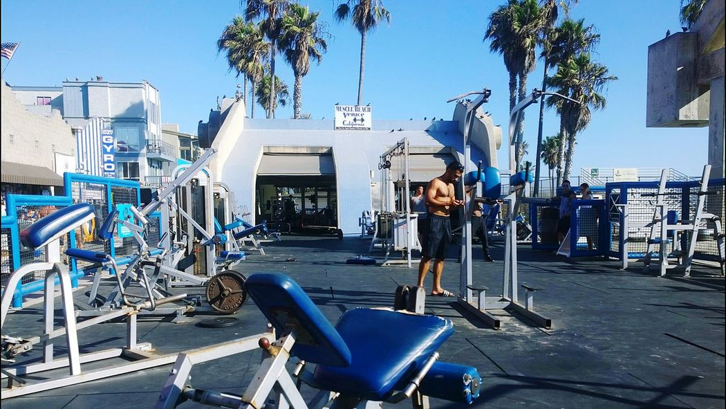 Observing Weights Exercise People Gym Muscle Beach