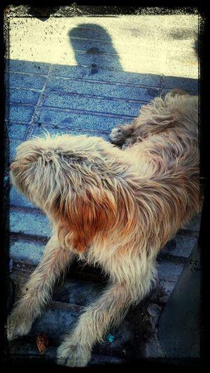 Dog Love Animal Love Perros De La Calle Enjoying Life