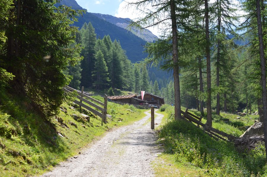 Happy evening, dear friends 🙋🏻♀️☀️⚽️ Italy Italia Italien Alto Adige Südtirol South Tyrol Ultental Tree Plant Nature Growth Land Beauty In Nature Sunlight Day Green Color Mountain Tranquility Tranquil Scene Shadow No People Scenics - Nature Grass Built Structure Outdoors Non-urban Scene