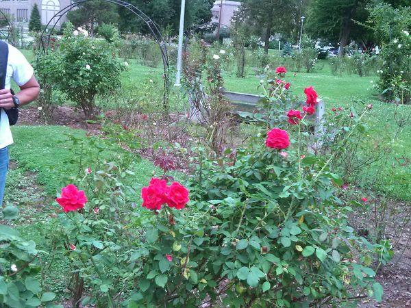 Parque de las rosas en bethlehem pensylvania