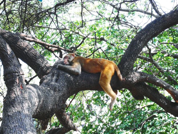 Low angle view of monkey sleeping on tree