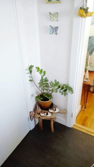 Indoors  Growth No People Plant Home Interior Nature Day Freshness Domestic Life Domestic Room Painted Image Drawing - Art Product Freshness Bouquet Beauty In Nature Close-up Nature Fragility Flower Pot Radiator Food And Drink Architecture Plant Flower Window