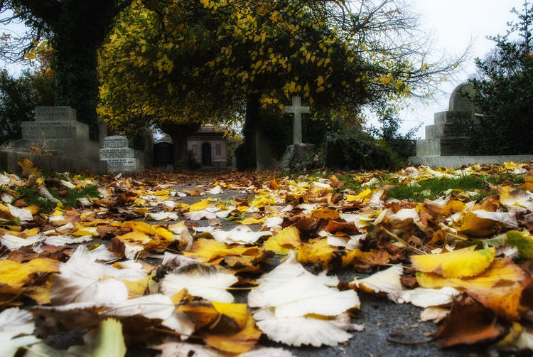 Autumn in the graveyard. Nature Tree No People Growth Beauty In Nature Outdoors Day Freshness Built Structure Fragility Southsea Autumn Colors Portsmouth England Autumn Beauty In Nature Leaf Tranquility Graveyard Graveyard Beauty Gravestones Nature_collection