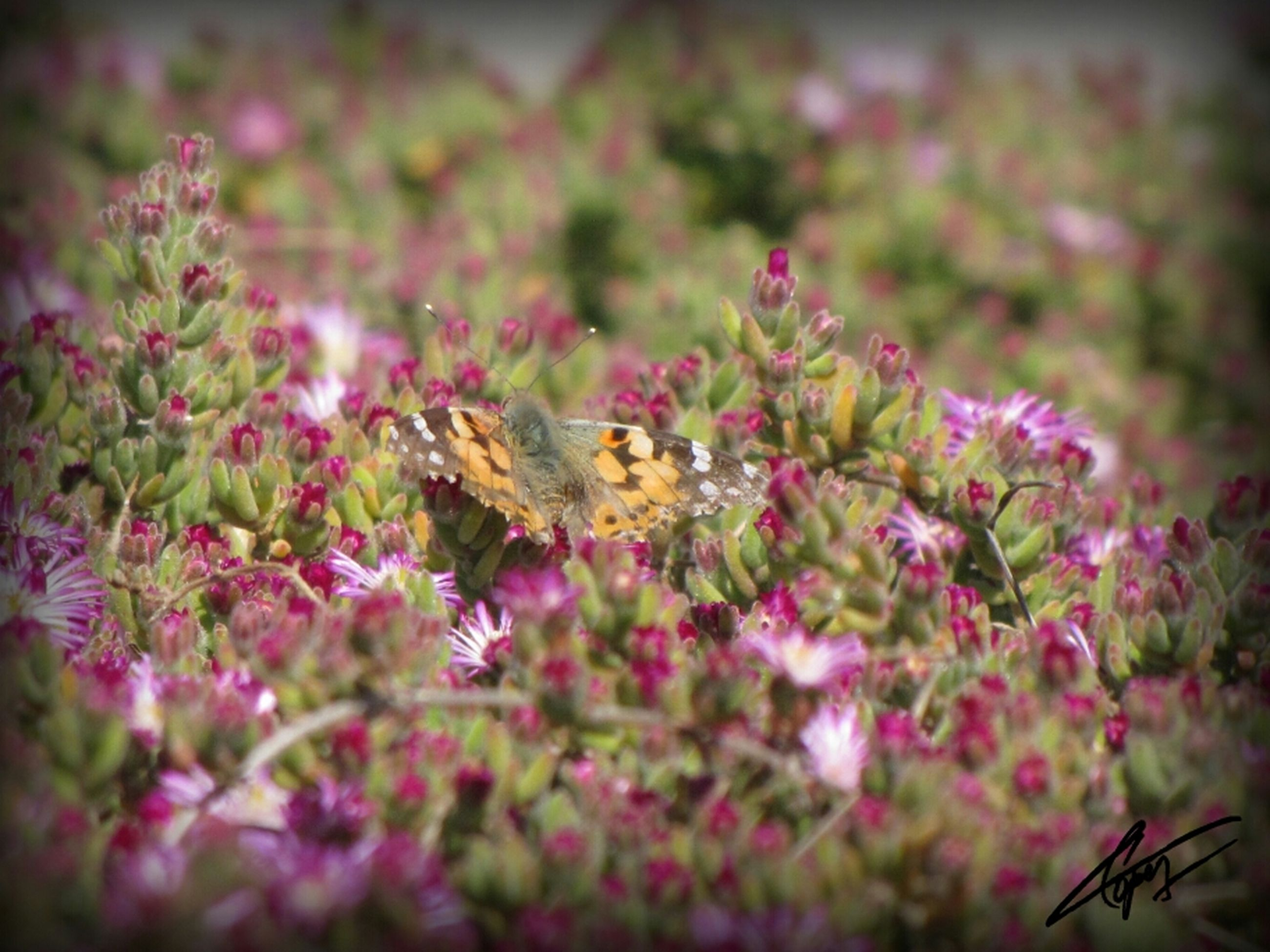 animal themes, animals in the wild, one animal, insect, wildlife, flower, pollination, beauty in nature, fragility, nature, bee, growth, focus on foreground, freshness, close-up, selective focus, plant, butterfly, symbiotic relationship, petal