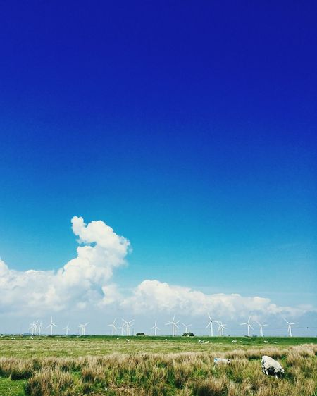 Field Cloud - Sky Copy Space Agriculture Sky Blue Rural Scene Outdoors Nature Day No People Tranquility Wind Power Wind Turbine Landscape Grass Beauty In Nature