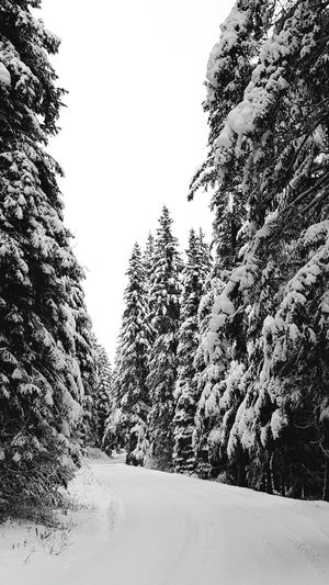 Walking in a winter wonderland Winter Cold Temperature Nature Landscape Outdoors Snow Walking White Winter Scene Nature Cold Quiet Places Snow Covered Trees Peaceful Rural Trees Snowy No People Quiet Monochrome Naturelovers Black And White Photography Black And White Collection  Tall Trees Road