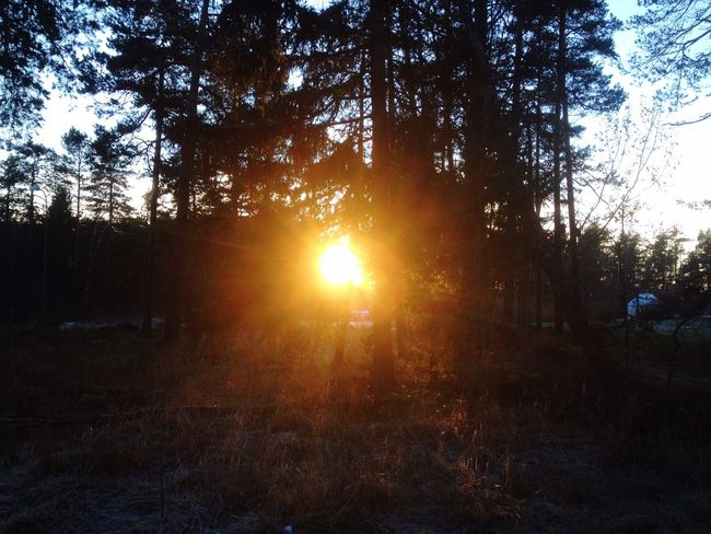 Winter's coming too an end people👏❤️ Sweden Sunset Woods Purty
