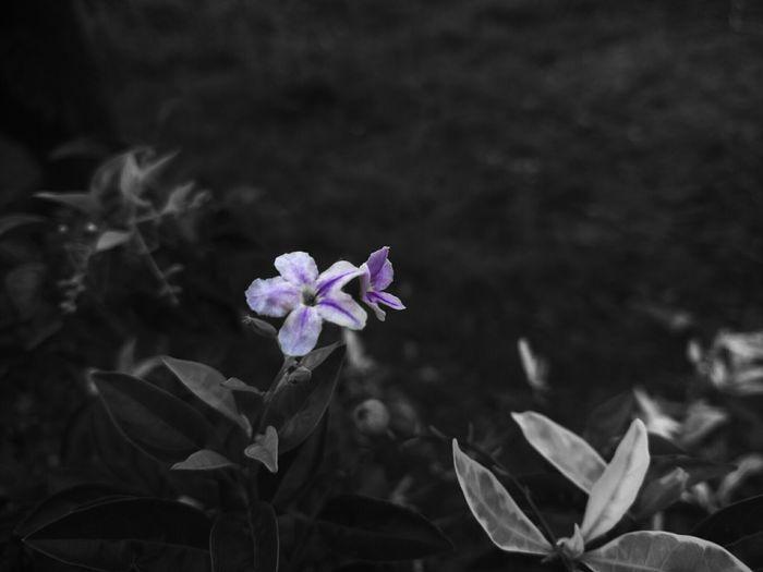Beautiful I ,Bloom to fade !!