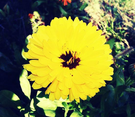 Walking Enjoying Life Hanging Out Hello World Relaxing Cheese! Taking Photos Flower Yellow Landscape_Collection