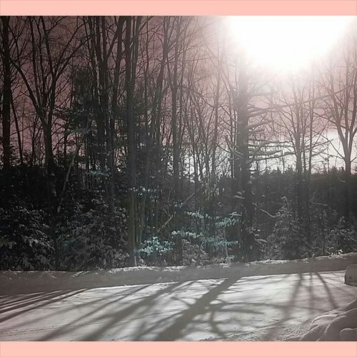 I love the way this photo looked this morning... ❄ Snowstorm FinalResults Maroon Beautiful Winter PineTrees January2015