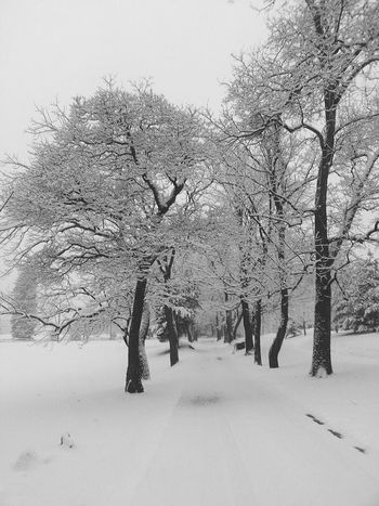 Relaxing Taking Photos Check This Out Enjoying Life Hanging Out No People I Love My Job February 2015 Snow My Job So Pretty Tree White Its Cold Outside Showcase: February Snow Minimal