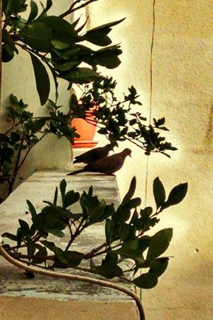 Pigeons Doves Birds Bird On The Window Ledge Urban Nature Urban Halo Plants Concrete