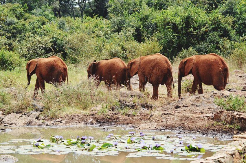 Nature Kenya Nairobi Kenya