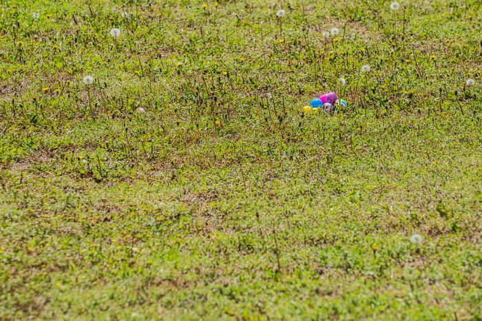 Beauty In Nature Day Easter Easter Egg Hunt Easter Eggs Grass Green Color Growth High Angle View Nature No People Outdoors Plastic Easter Eggs Sunlight