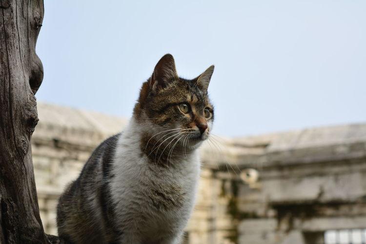 Nikon D5200 Cat Animal Photography EyeEm Best Shots EyeEm